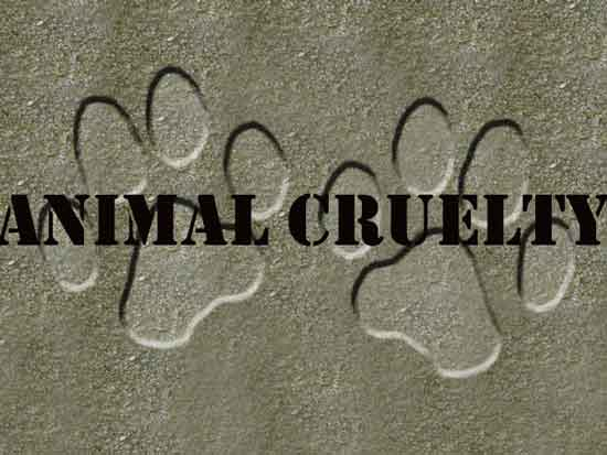 animalcrueltyGFX_19377