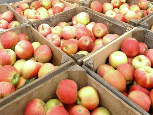 apples_53296