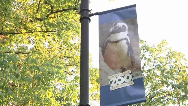 knoxville-zoo_60397