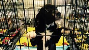 rescueddogs1_84383