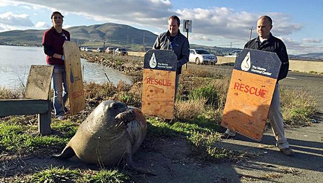 Seal Stops Traffic_88672