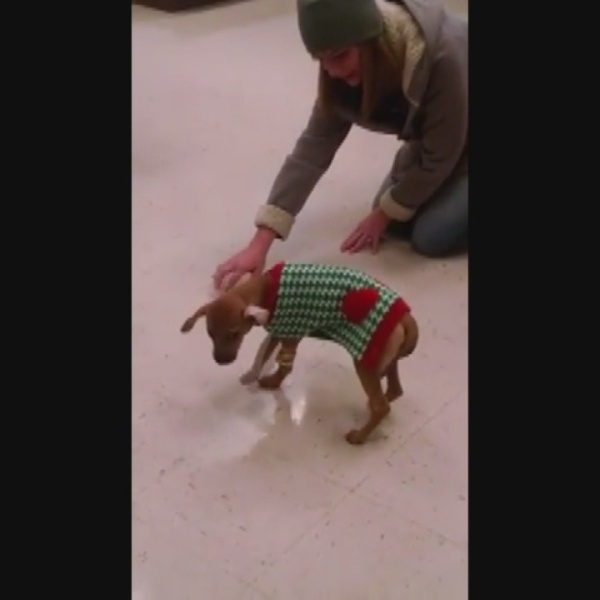 Puppy found frozen, clinging to life in Kingsport