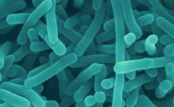 listeriabacteria_100664