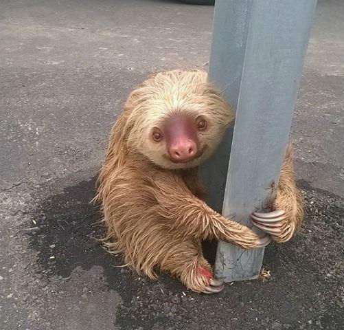 sloth_101887