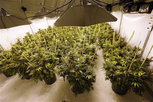 Legal Marijuana Washington_117738