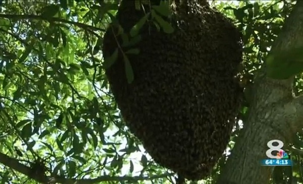 Bees_127923
