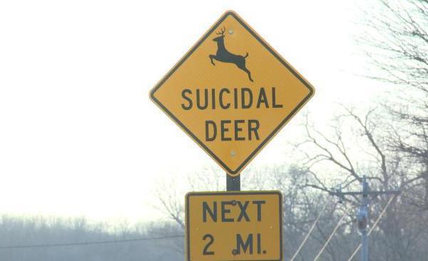 deer_124189