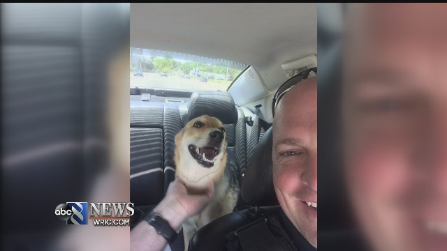 dog-rescue_145683