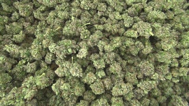 marijuana_138387