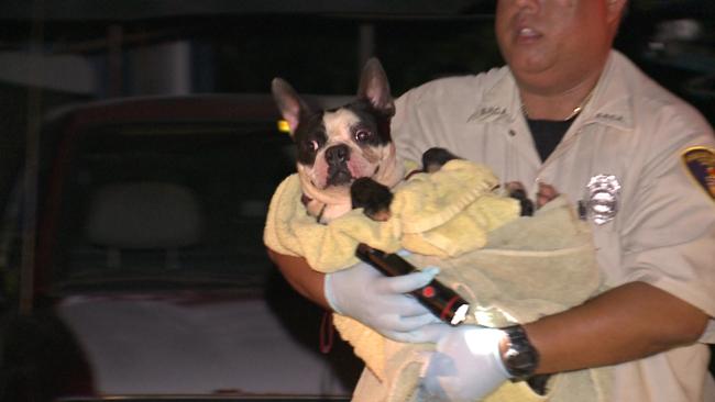 kahaluu-dog-rescue-4_157367