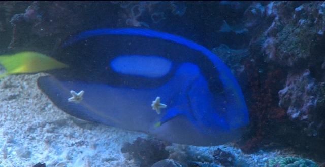 bluetang_183045