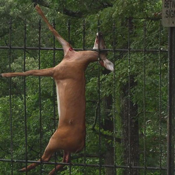 deer fence_177647