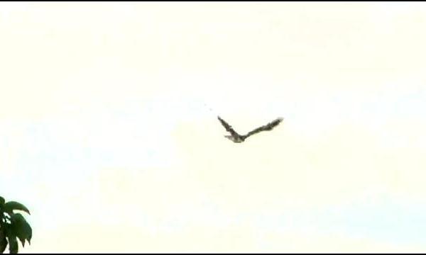 eagle_183463
