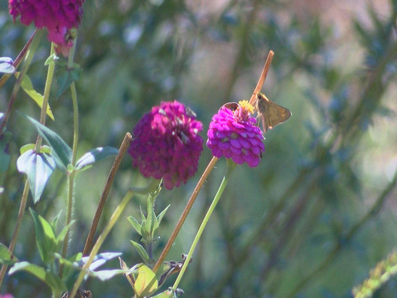 etsu-pollinator-garden-1_217229
