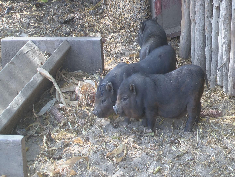 fenders-farm_226947