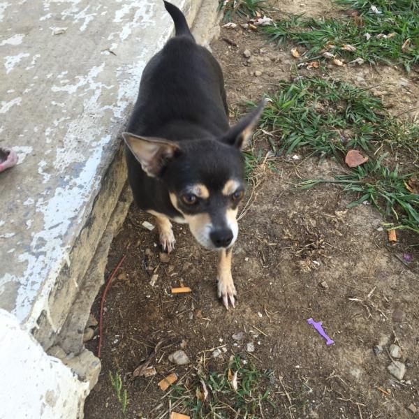 greeneville-dog_228621