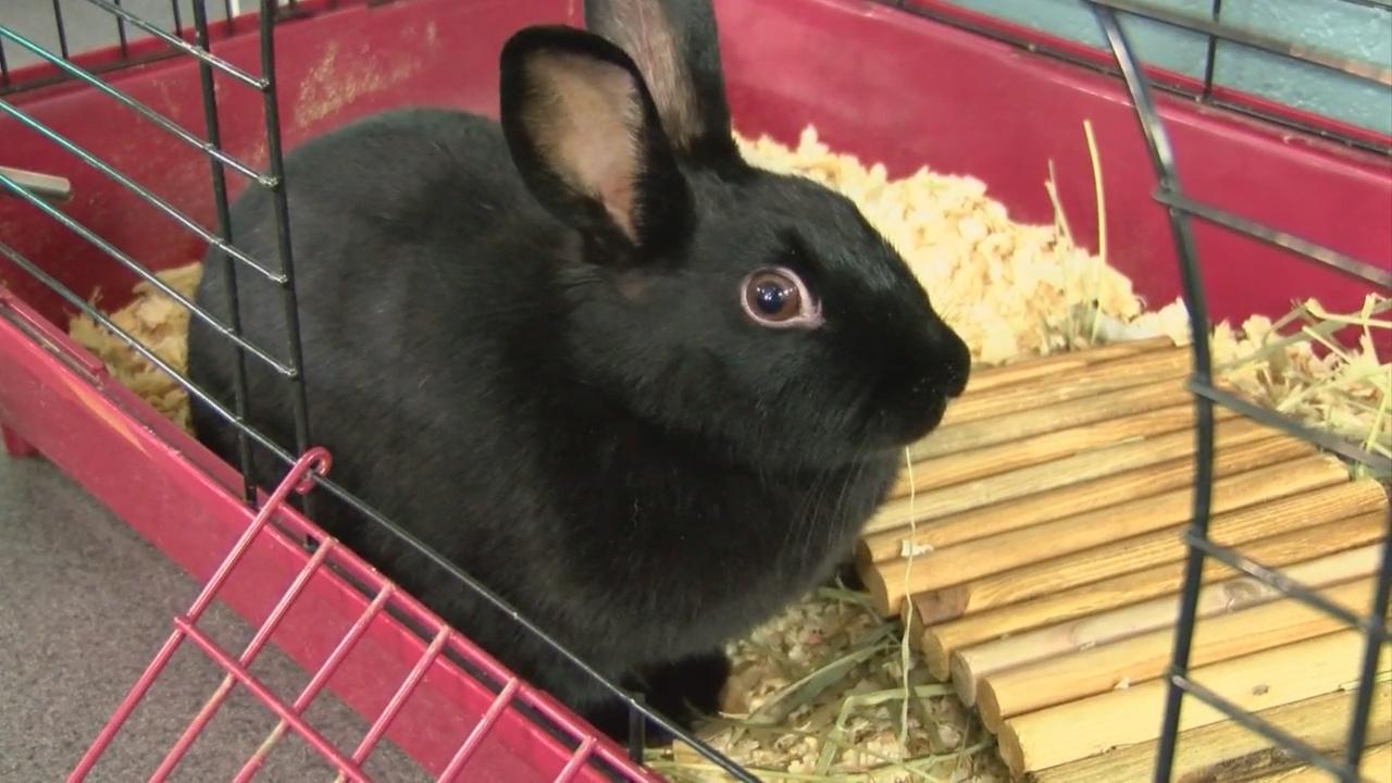 bunny_239488