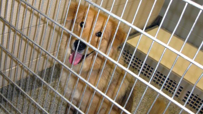 Pets-Shelter Music_273625