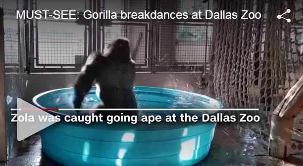 gorillabreakdances_357387