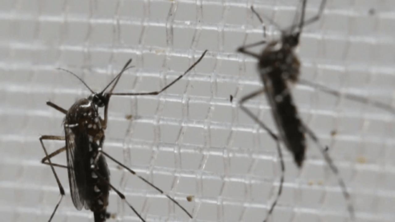 Mosquito-borne illness kills 11, case reported in