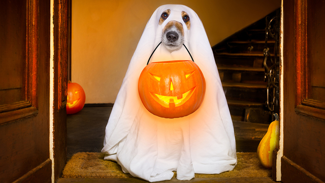 Halloween Ghost Dog Trick Or Treat_426278