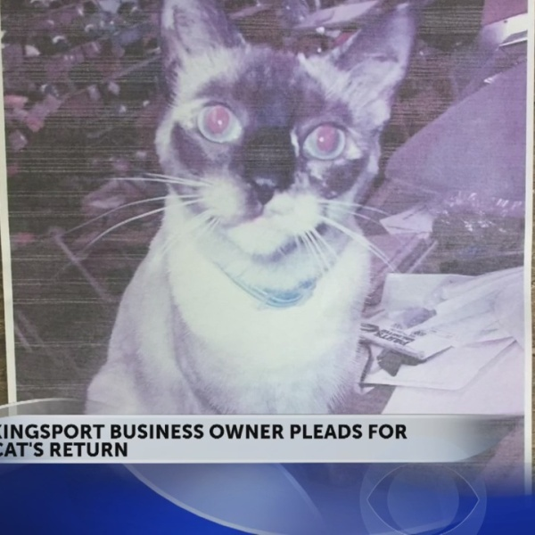 Kingsport_business_owner_pleads_for_cat__0_20180612215527