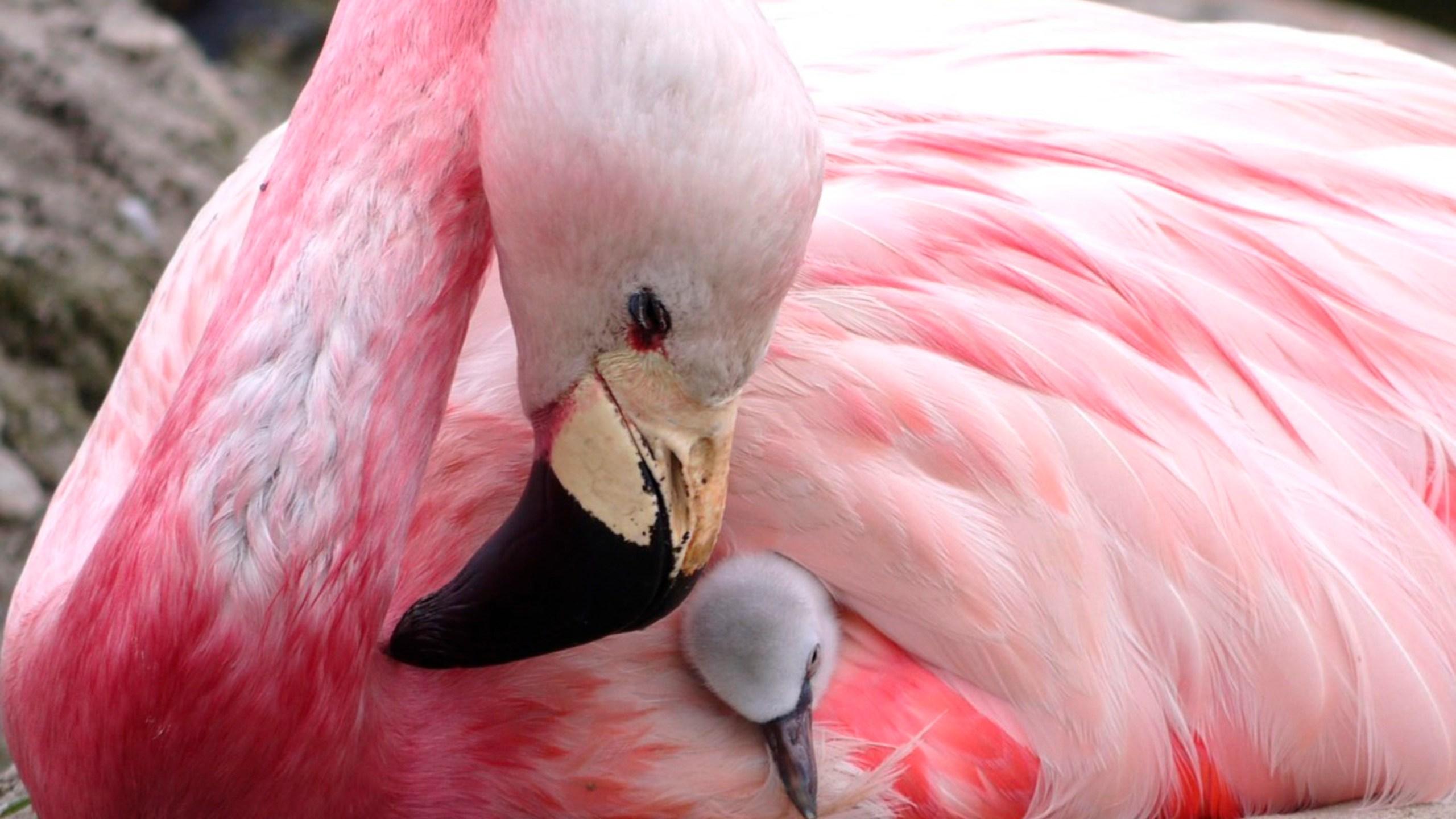 Britian_Heat_Flamingos_05616-159532.jpg10543105
