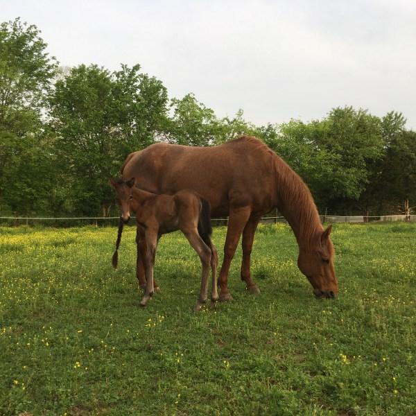 Horses (1)_1541019781173.JPG.jpg