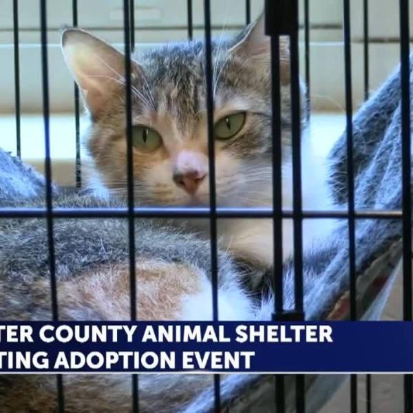 Carter_County_adoption_event_8_20181219164441