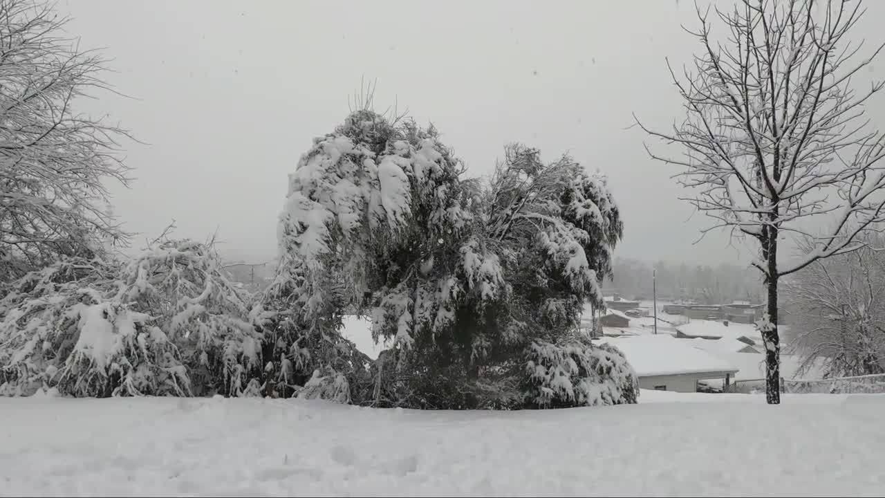 Snow causes tree to fall in Kingsport