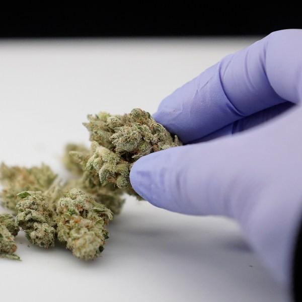 Medical_Marijuana_Utah_80134-159532.jpg76519383