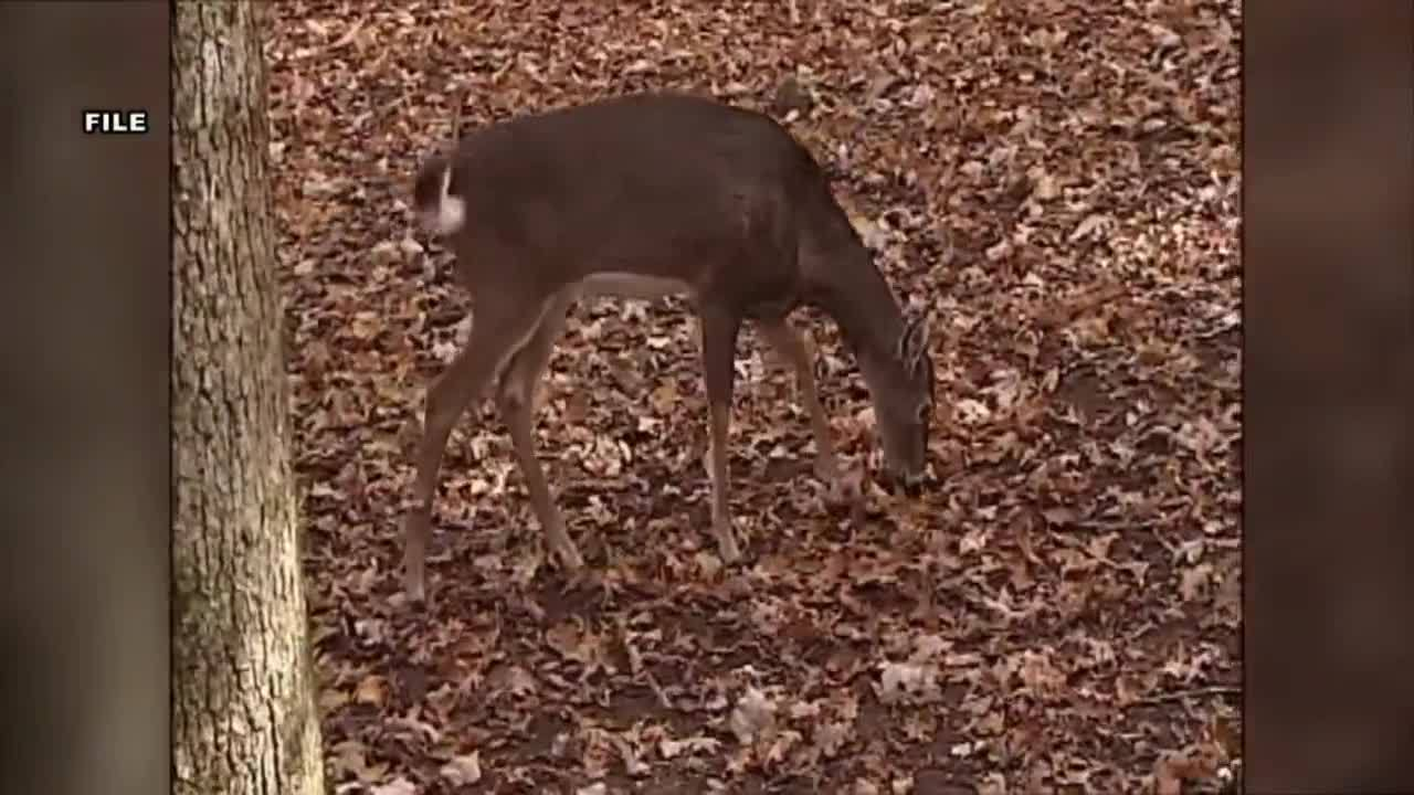 CWD_affecting_Tennessee_deer_7_20181220210344