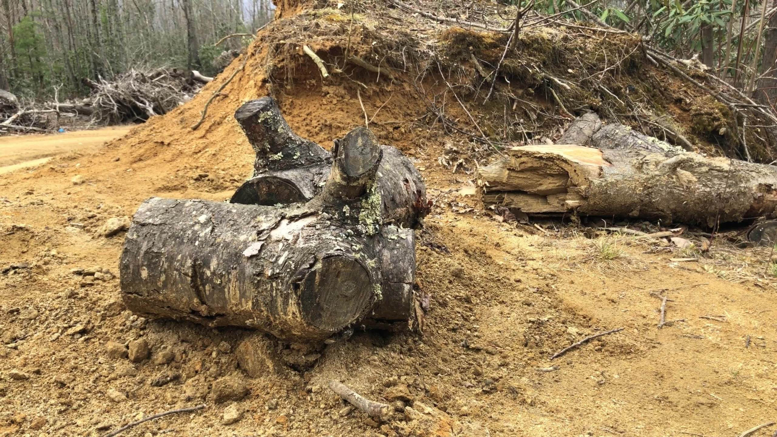 Animal dumping in Carter County
