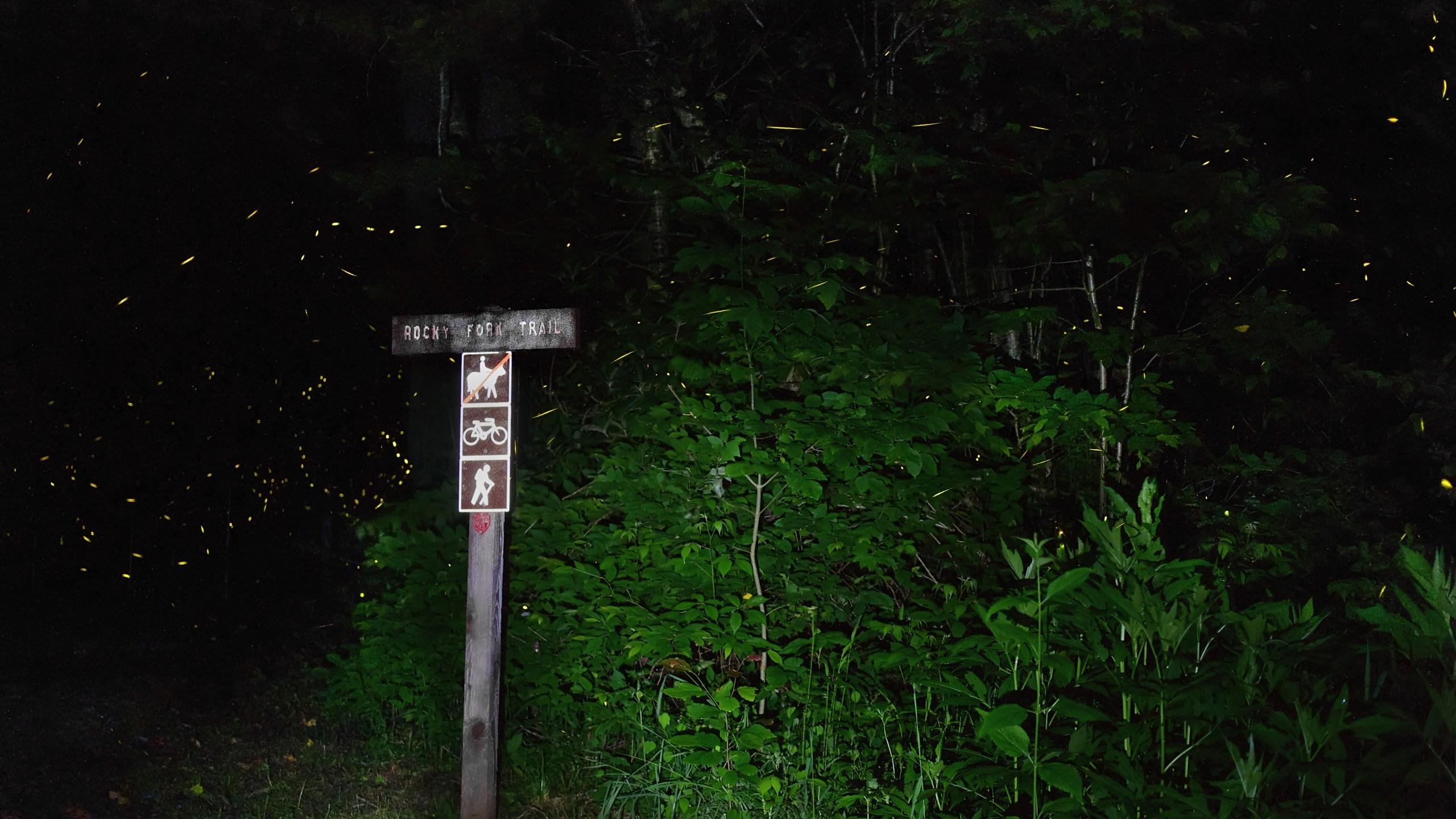 Fireflies 2_credit Marty Silver_1556634250956.jpg.jpg