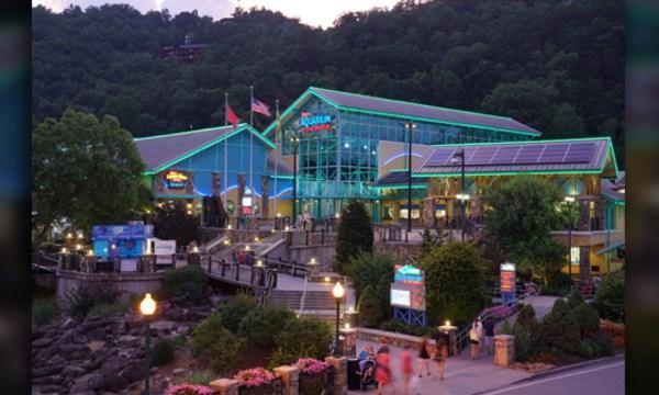 Ripley's-Aquarium_1554217039678_80285231_ver1.0_640_360_1554233276838.jpg