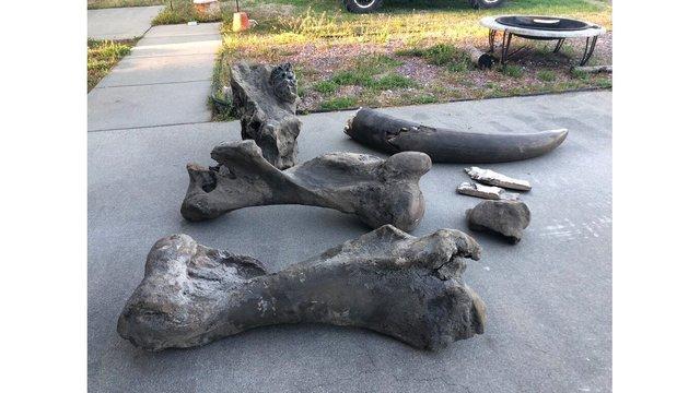 Mastodon Unearthed Seymour_1555609221220