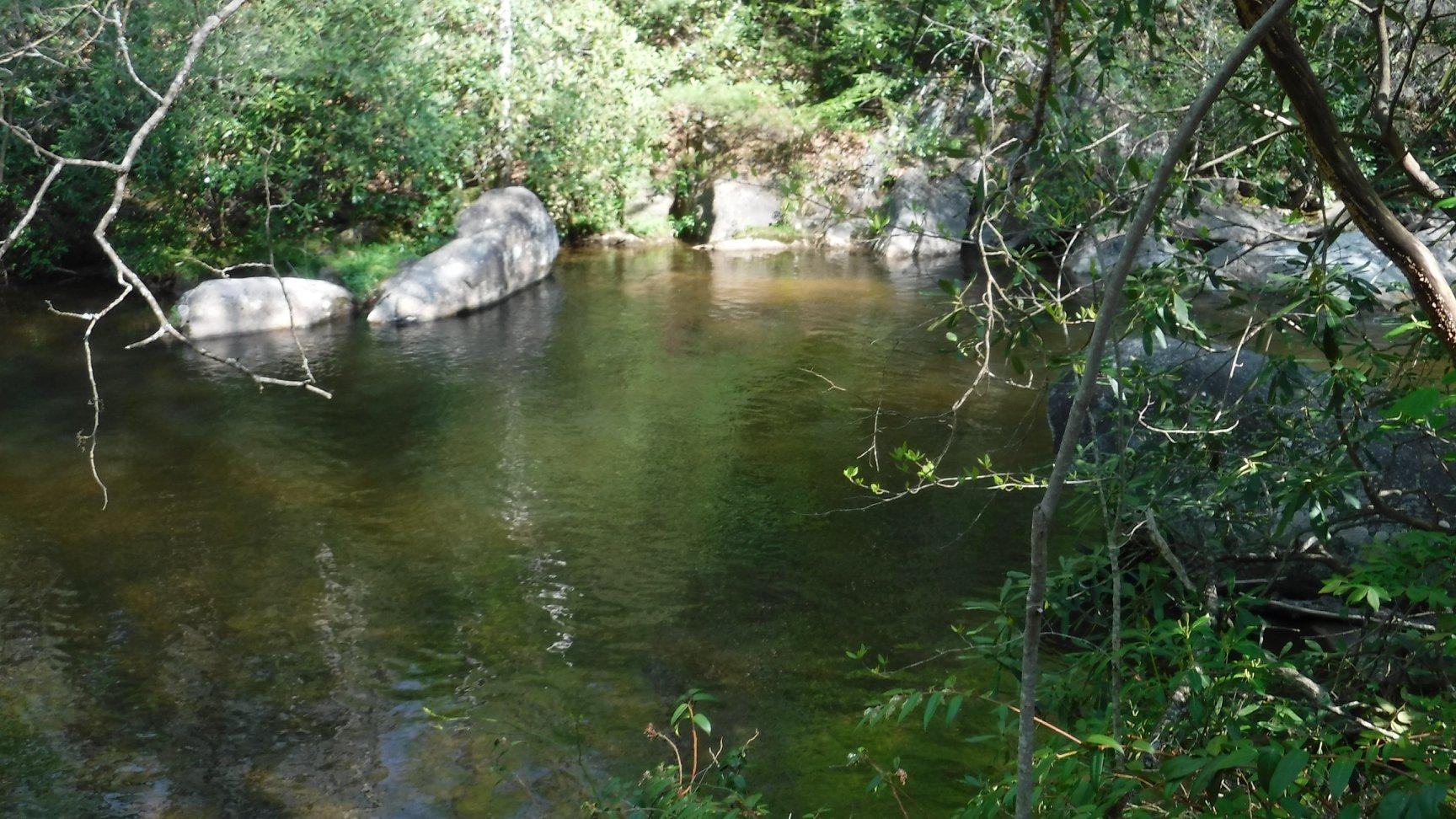 Laurel Fork in Dennis Cove