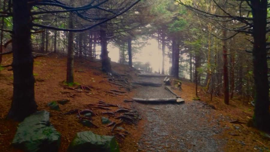 roan mountain carvers gap