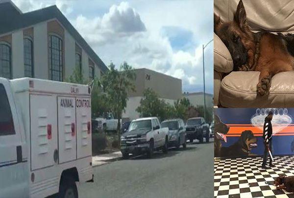 Dog abuse_1558547698481.JPG-54701979.jpg