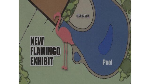 Flamingo_1558455624654_88474646_ver1.0_640_360_1558463356811.jpg