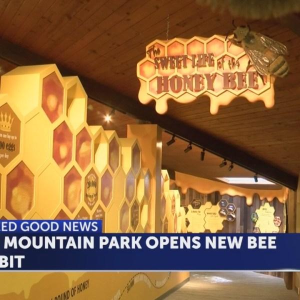 New bee exhibit at Bays Mountain