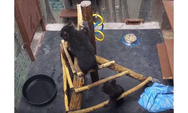 three-bears_1556915749356_85862824_ver1.0_640_360 (1)_1556921079208.JPG.jpg