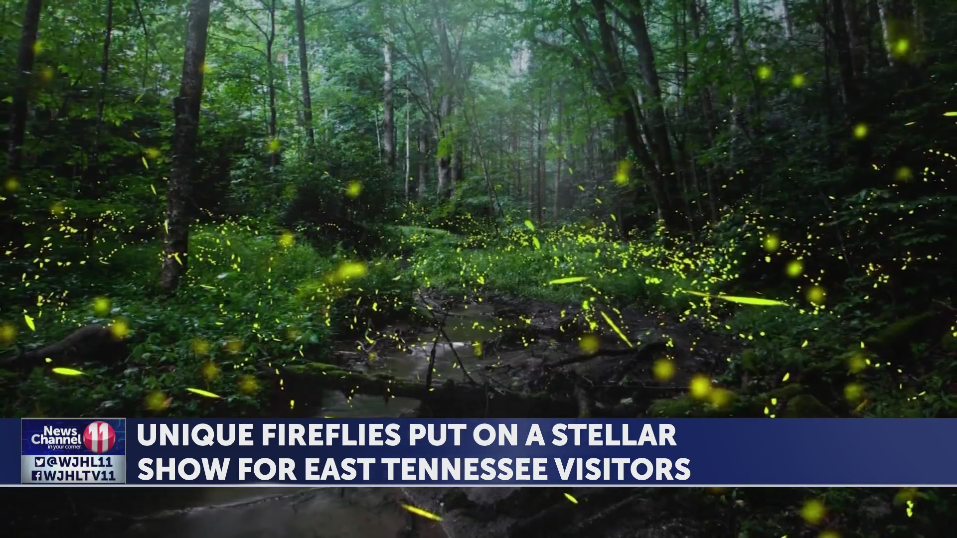 Unique fireflies put on a stellar show for East Tennessee visitors