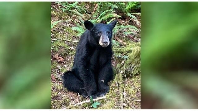 black bear_1560862442432.jpg.jpg