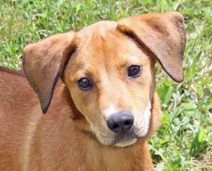Sullivan Co Animal Shelter To Reopen Wednesday For Cat Adoptions After Eighth Dog Dies Wjhl